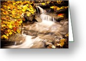 Red Leaves Greeting Cards - Autumn Stream No 1 Greeting Card by Kamil Swiatek