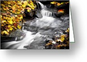 Red Leaves Greeting Cards - Autumn Stream No 2 BW Greeting Card by Kamil Swiatek