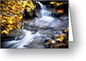 Red Leaves Greeting Cards - Autumn Stream No 2 Greeting Card by Kamil Swiatek