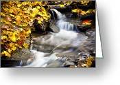 Red Leaves Greeting Cards - Autumn Stream No 3 Greeting Card by Kamil Swiatek