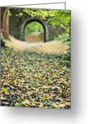 Fall Leaves Photo Greeting Cards - Autumn Stroll Greeting Card by Meirion Matthias
