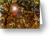 Autumn Photographs Greeting Cards - Autumn Sunburst Greeting Card by Carolyn Marshall