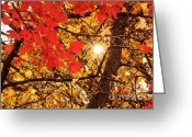 Colorful Photography Mixed Media Greeting Cards - Autumn Sunrise Painterly Greeting Card by Andee Photography