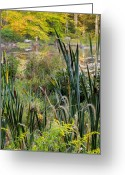 Autumn Scenes Greeting Cards - Autumn Swamp Greeting Card by Bill  Wakeley