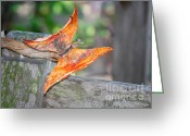 Fallen Leaf Greeting Cards - Autumn - the years loveliest smile Greeting Card by Christine Till