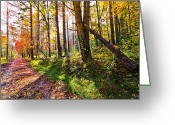 Fall Cards Greeting Cards - Autumn Trail Greeting Card by Debra and Dave Vanderlaan