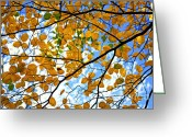 Canopy Greeting Cards - Autumn tree branches Greeting Card by Elena Elisseeva