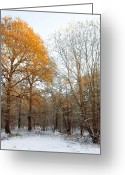 White Wolf Greeting Cards - Autumn Tree Greeting Card by Svetlana Sewell