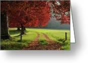 Dirt Road Greeting Cards - Autumn Trees In Garden Greeting Card by Philippe Sainte-Laudy Photography
