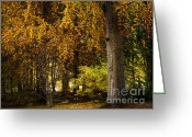 Red Autumn Trees Greeting Cards - Autumn Trees Greeting Card by Lutz Baar