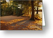 Twilight Greeting Cards - Autumn trees near lake Greeting Card by Elena Elisseeva