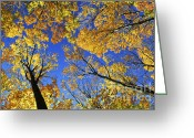Bright Color Greeting Cards - Autumn treetops Greeting Card by Elena Elisseeva