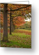 Victoria Wise Greeting Cards - Autumn Greeting Card by Victoria Wise