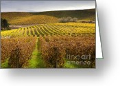 Grapevines Greeting Cards - Autumn Vines Greeting Card by Mike  Dawson