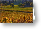 Grapevines Greeting Cards - Autumn vineyards Greeting Card by Garry Gay