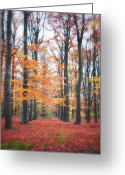 Colored Photographs Greeting Cards - Autumn Whispers I Greeting Card by Artecco Fine Art Photography - Photograph by Nadja Drieling
