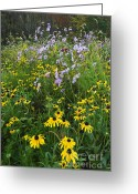 Indiana Autumn Greeting Cards - Autumn Wildflowers - D007762 Greeting Card by Daniel Dempster