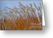 Swaying Greeting Cards - Autumn Wind through the Grass Greeting Card by Mary Machare