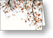 Photos Of Autumn Greeting Cards - Autumn2 Greeting Card by Benny  Woodoo