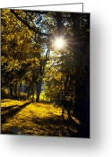 Autumnal Digital Art Greeting Cards - Autumnal Morning Greeting Card by Bill Cannon