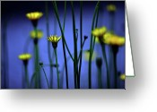 Aster  Photo Greeting Cards - Avatar Flowers Greeting Card by Mauro Cociglio - Turin - Italy