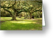 Louisiana Greeting Cards - Avery Island Oaks Greeting Card by Scott Pellegrin