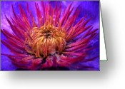 Purple Garden Greeting Cards - Awakening Greeting Card by Jeff Breiman