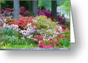 Creative Passages Photo Greeting Cards - Azalea garden Greeting Card by Cassandra Donnelly