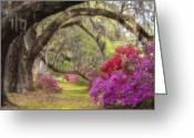 Magnolia Greeting Cards - Azalea Lane Greeting Card by Joseph Rossbach
