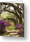Carolina Greeting Cards - Azaleas and Live Oaks at Magnolia Plantation Gardens Greeting Card by Dustin K Ryan