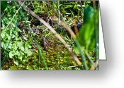 Frank Feliciano Greeting Cards - Baby Alligators with Mom Greeting Card by Frank Feliciano