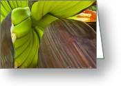 Exotic Fruits Greeting Cards - Baby Bananas Greeting Card by Heiko Koehrer-Wagner