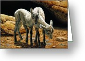 Sheep Greeting Cards - Baby Bighorns Greeting Card by Crista Forest
