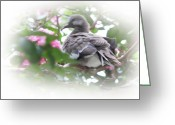 Mocking Greeting Cards - Baby Bird in Crape Myrtle Tree Greeting Card by Linda Phelps