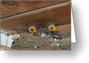 Byzantine Greeting Cards - Baby birds  Picture Greeting Card by Preda Bianca