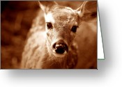 Whitetail Deer Greeting Cards - Baby Cakes Greeting Card by Emily Stauring