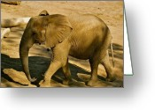 Mammal Photograph Greeting Cards - Baby Elephant Greeting Card by Debra     Vatalaro