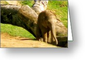 Mammal Photograph Greeting Cards - Baby Elephant Running Greeting Card by Debra     Vatalaro