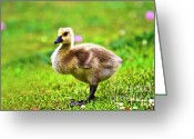 Canada Goose Greeting Cards - Baby Face Greeting Card by Scott Pellegrin