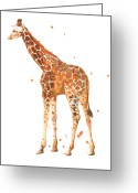 African Animals Painting Greeting Cards - Baby Giraffe Greeting Card by Alison Fennell
