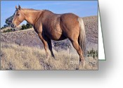 Quarter Horses Greeting Cards - Baby On Board Greeting Card by Juls Adams