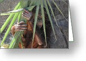 Palm Leaf Greeting Cards - Baby Orangutan Greeting Card by Joe Dragt