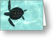 Endangered Species Greeting Cards - Baby Sea Turtle Greeting Card by Ellen Henneke