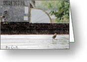 Roof Greeting Cards - Baby Seagull Running in the rain Greeting Card by Bob Orsillo