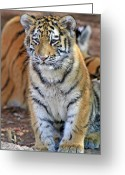 Baby Room Photo Greeting Cards - Baby Stripes Greeting Card by Scott Mahon