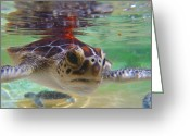 Hawksbill Turtle Greeting Cards - Baby turtle Greeting Card by Carey Chen