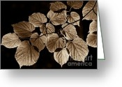 Brown Leaves Greeting Cards - Back Lighted Leaves Sepia Greeting Card by Jennie Marie Schell