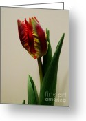 Got Greeting Cards - Back of Double Tulip Greeting Card by Marsha Heiken