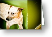 Dog Photographs Greeting Cards - Back off  Greeting Card by Toni Hopper