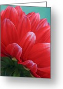 Hollyhock Greeting Cards - Back side of Red Dalia Greeting Card by James Steele